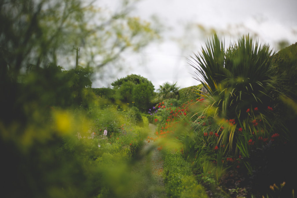 soft focus view through a garden