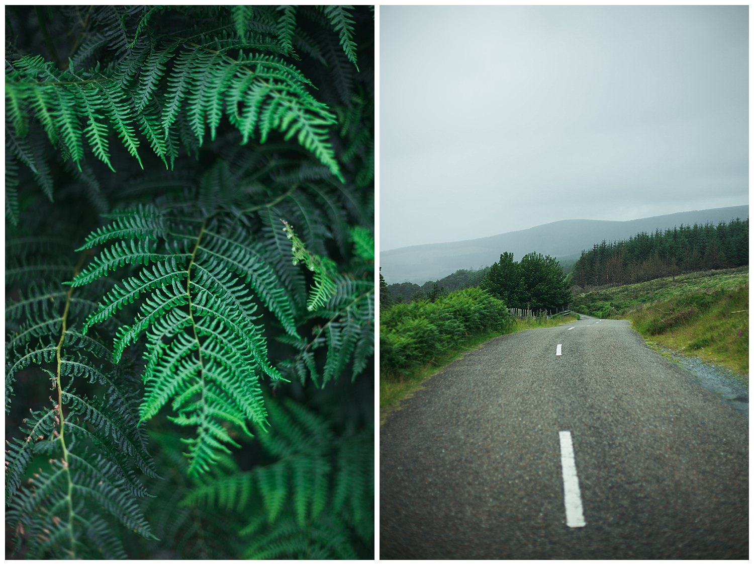 Ferns along military road in the Wicklow mountains