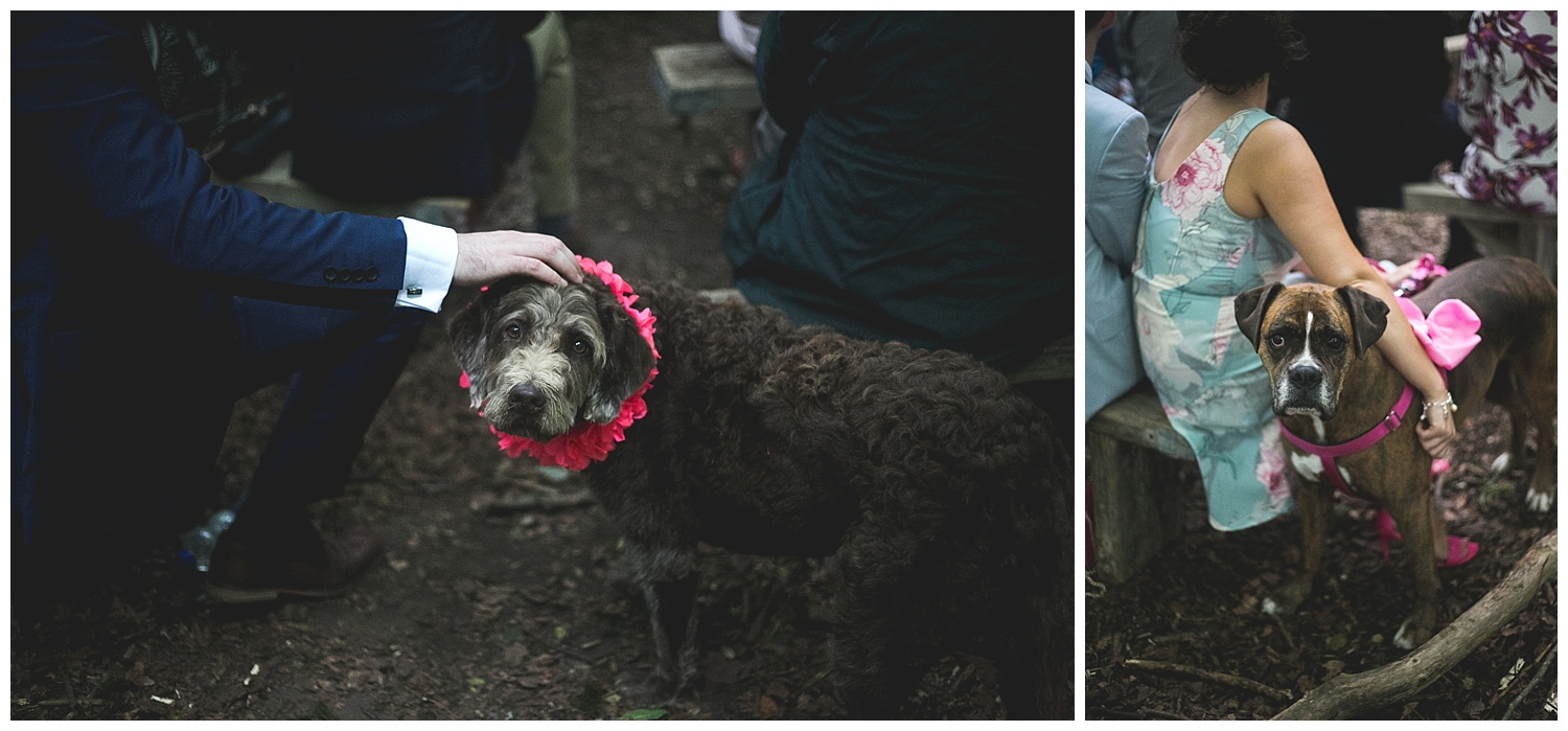 adorable dogs in flowers at a wedding