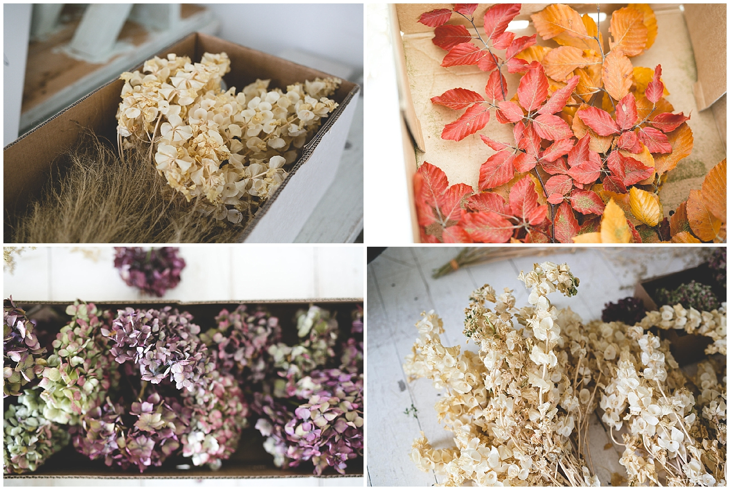 dried flowers, hydrangea & leaves